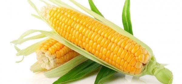 Wazy Maize is becoming increasing popular in the bodybuilding world.